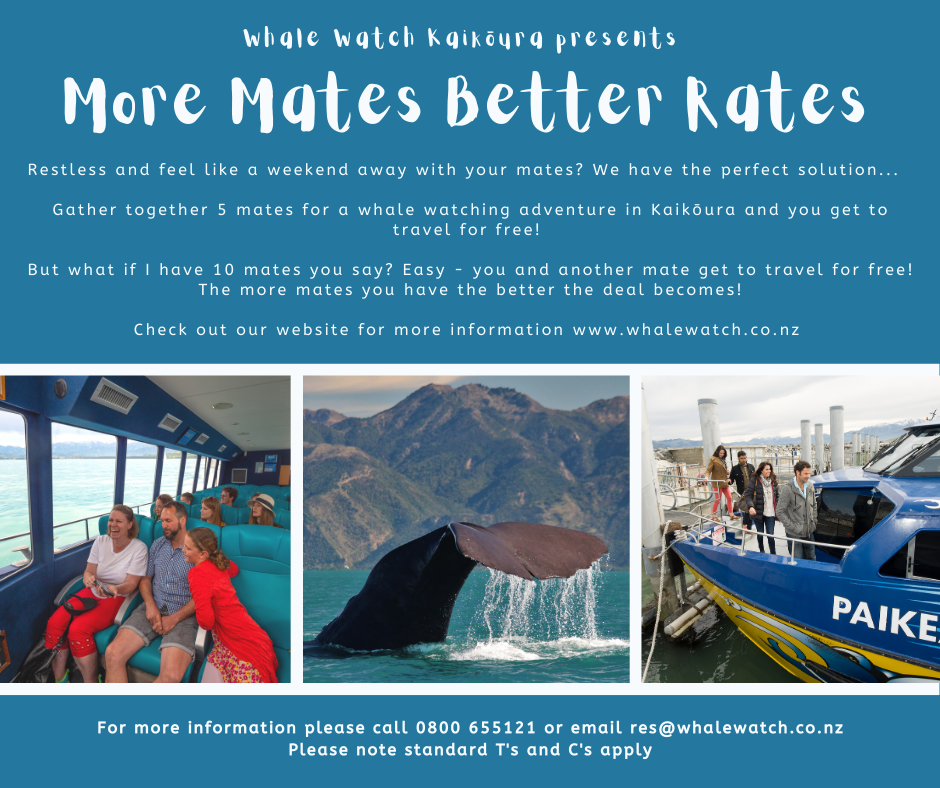 More mates Better rates 1