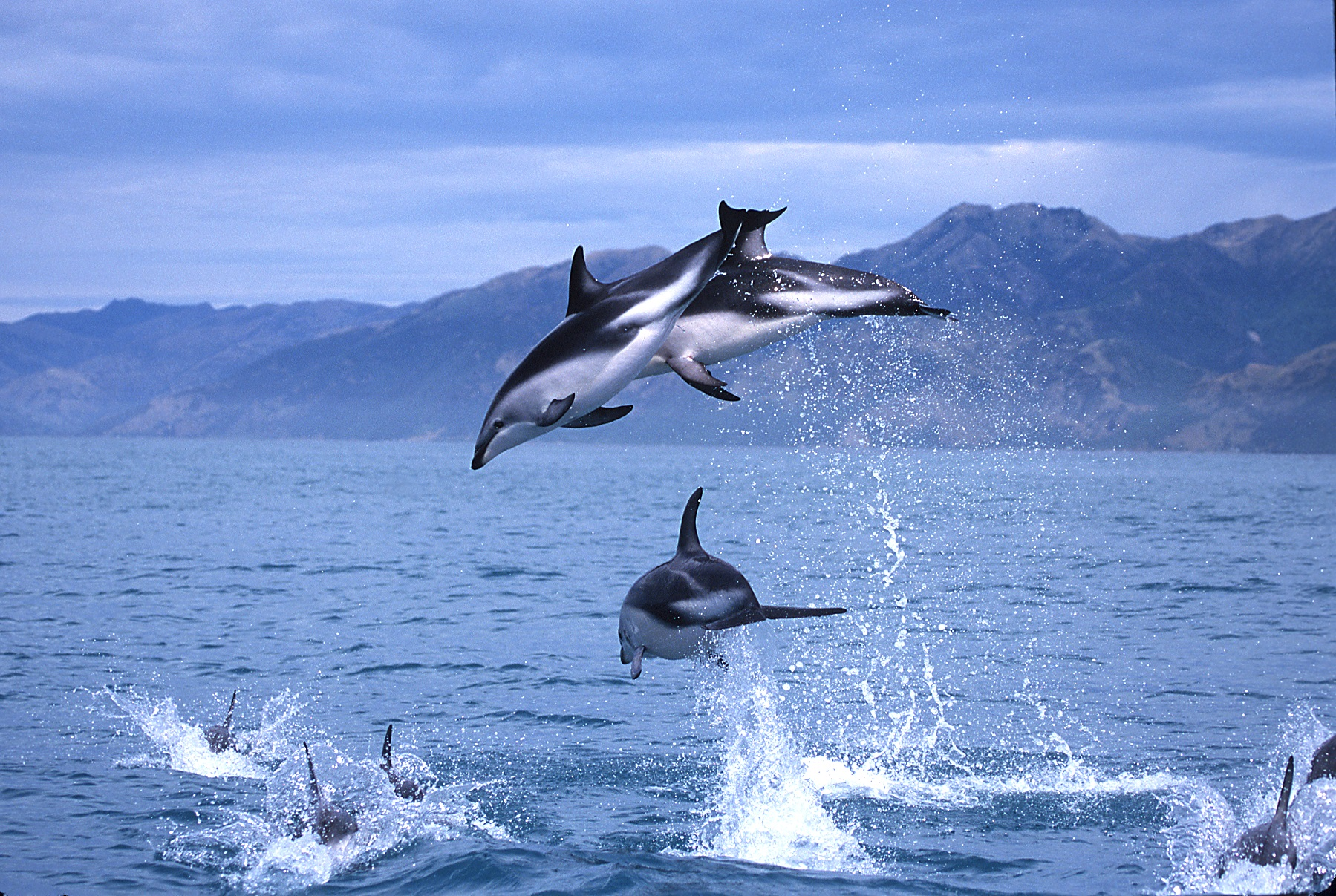 whale watch kaikoura Whale watch® kaikoura is new zealand's ultimate all year round nature experience offering visitors exciting close encounters with giant sperm whales an impressive 95% success rate means that you are guaranteed an 80% refund if your tour does not see a whale.