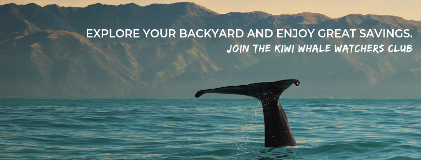 Explore your backyard and enjoy great savings. Join the Kiwi Whale Watchers Club