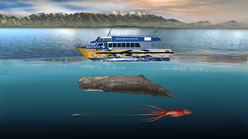 Sperm Whale Boat Squid