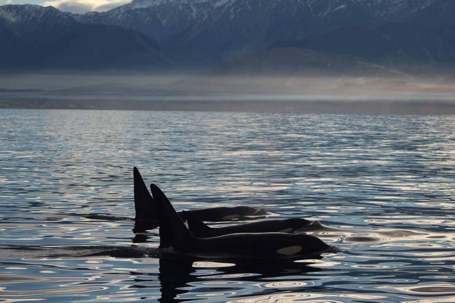 Best Time To Go Whale Watching In New Zealand